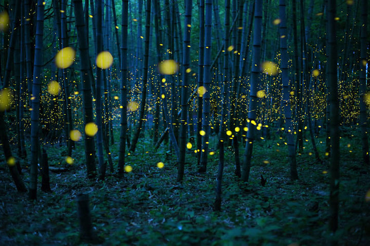 Kei_Nomiyama _Japón_ Poca luz_  2016 Sony World Photography Awards