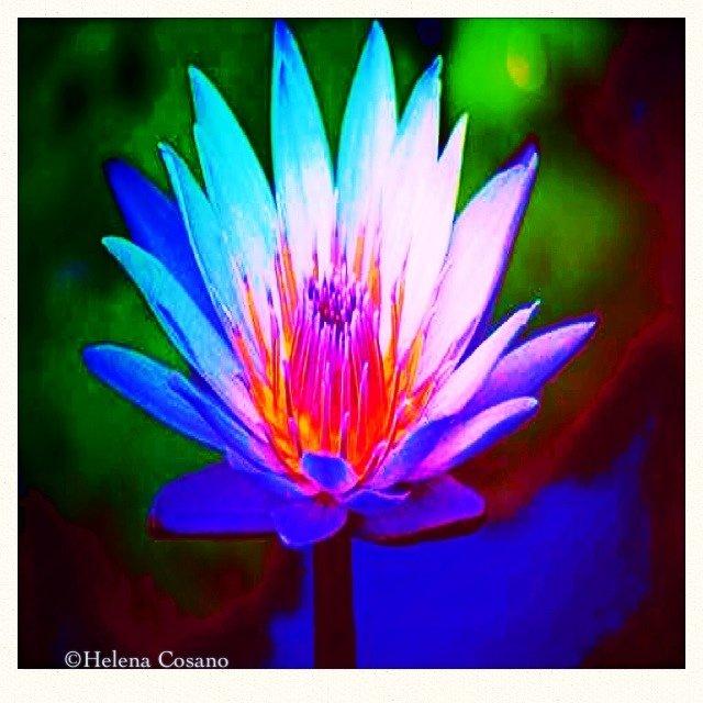 Flor de loto, uno de los símbolos de Oriente.