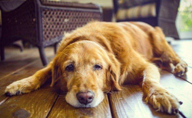 Resultado de imagen para perro enfermo