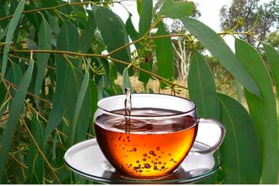 Conoce Todos Los Beneficios Del Té De Eucalipto